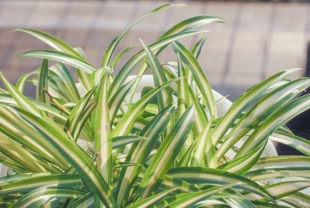 5 комнатных растений, которые лучше всего очистят воздух