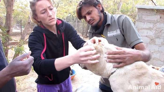Когда волонтеры нашли эту собаку, их сердце сжалось от ужаса и боли...