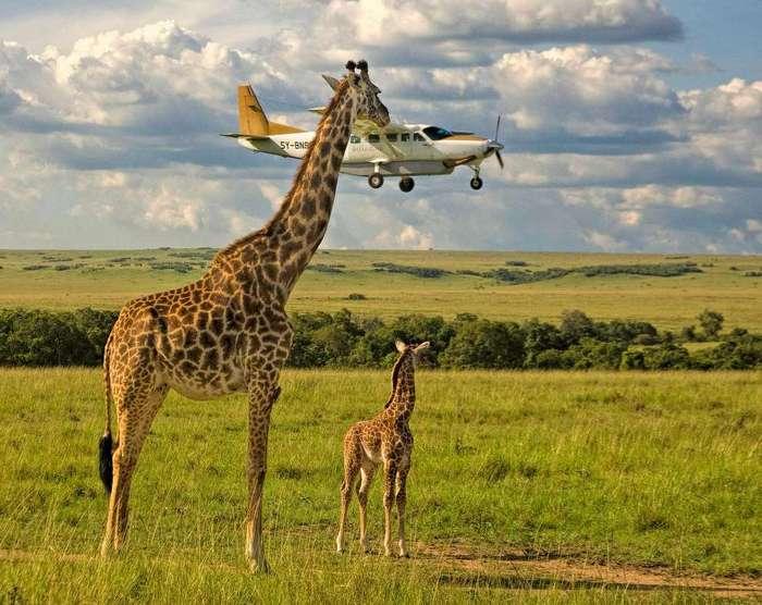 Comedy Wildlife Photography Awards 2017