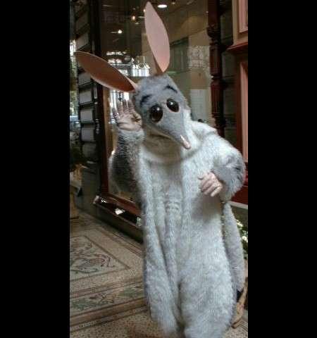 Необычная фауна Австралии: Бандикут (9 фото)