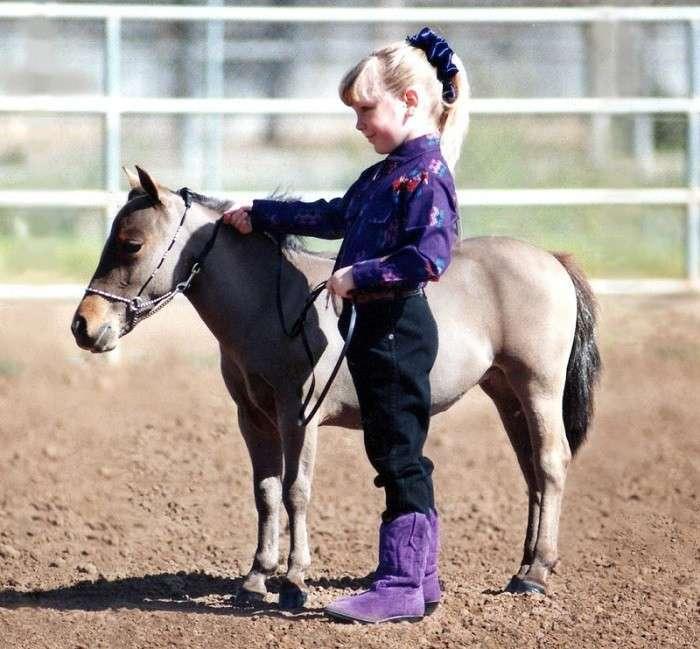 Миниатюрные лошади породы фалабелла (24 фото)
