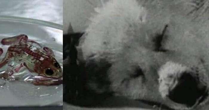 15 шокирующих результатов научных экспериментов (16 фото)