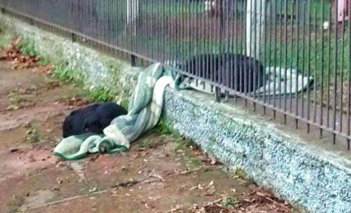 Домашняя собака поделилась своим одеялом с замерзающим бродячим псом (6 фото)
