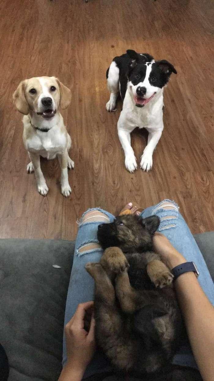 У этой семейной пары есть традиция каждый год дарить друг другу щенка в честь годовщины свадьбы (7 фото)