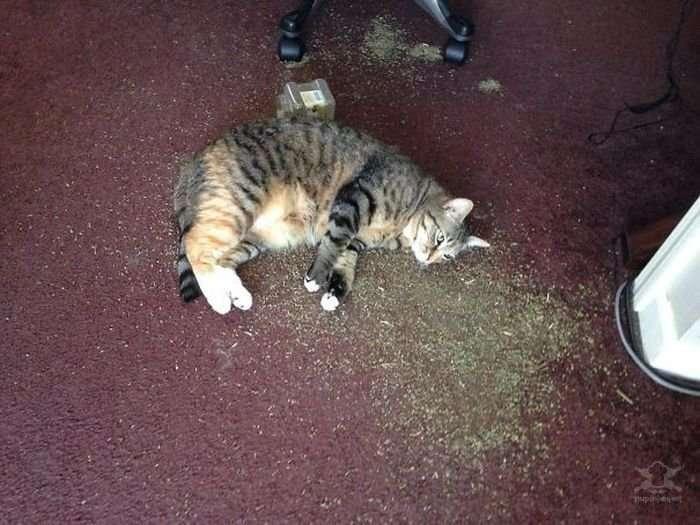 Забавные коты под различными веществами