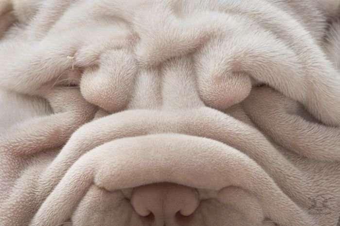 Удивительные портреты собак от фотографа Тима Флака