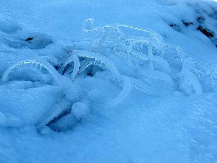 Ледяные черви (5 фото + 2 видео)