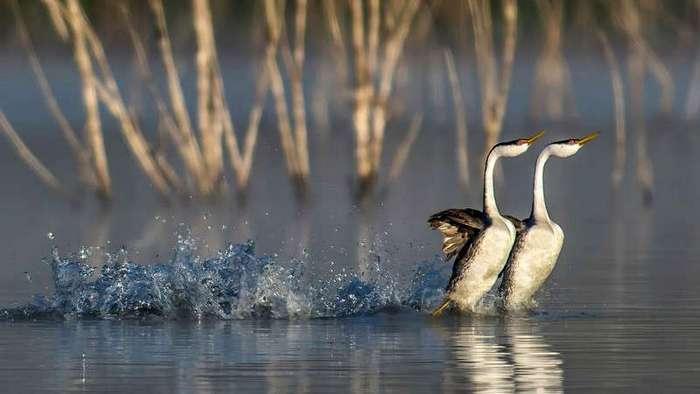 Прекрасные птицы от прекрасных фотографов (21 фото)