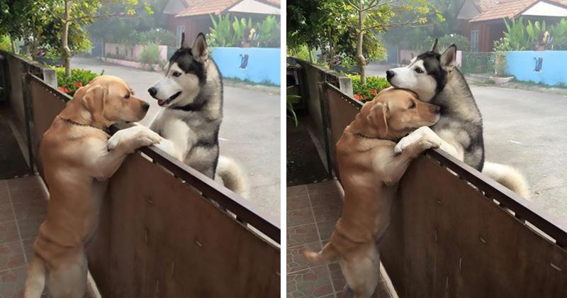 Одинокий пес сбежал со двора, чтобы обнять друга (5 фото)