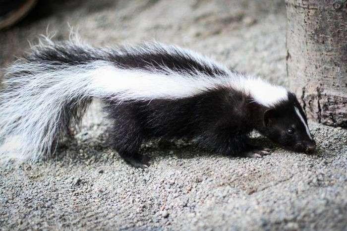 Удивительные животные, которые поражают своими суперспособностями (16 фото)