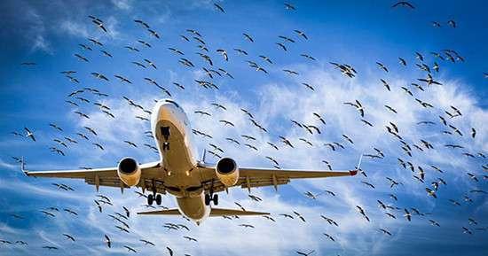 Байка о том, как русские авиаконструкторы немцам нос утёрли (4 фото)