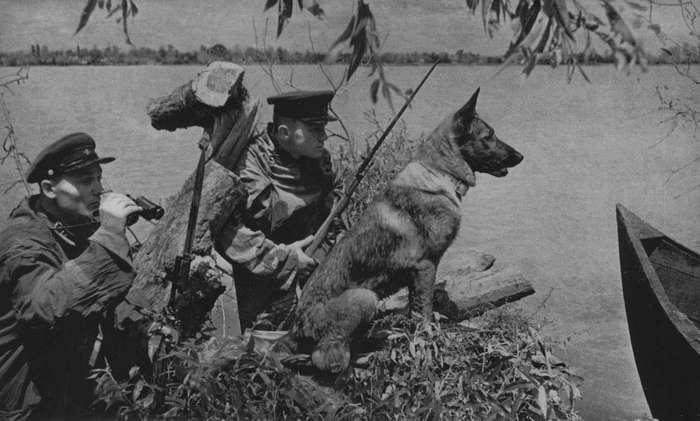 Как жилось собакам в Советском Союзе? (31 фото)