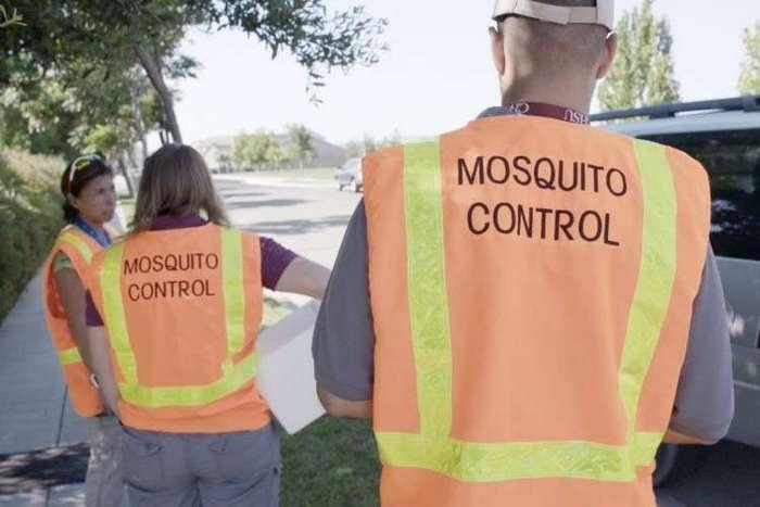 Alphabet запустит 20 млн заражённых комаров для борьбы с вирусом Зика (2 фото)