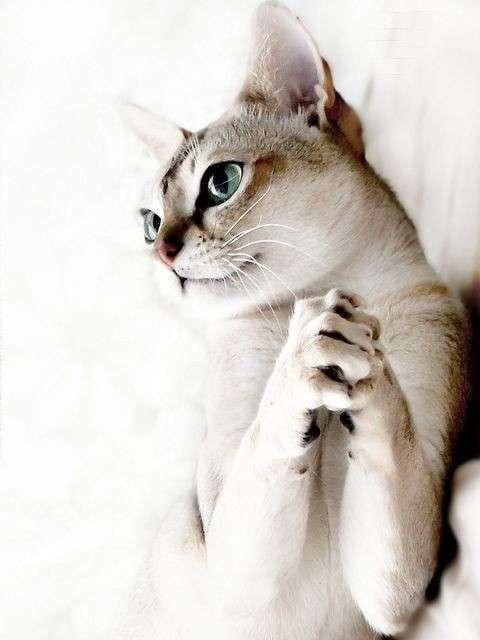 Кошачья жизнь - все как у людей (31 фото)