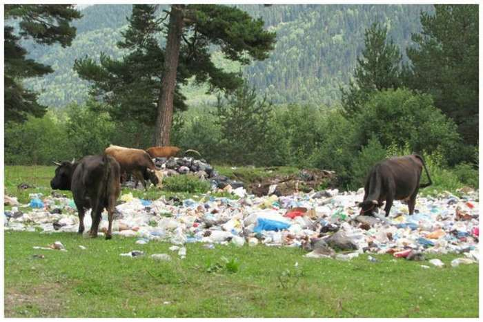 Фатберги - бич современной канализации и экологии (8 фото)