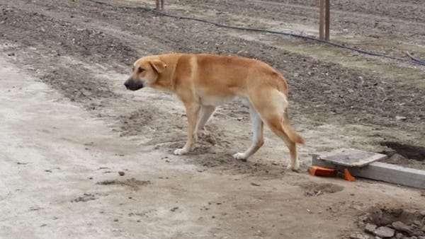 Её пронзительное письмо хозяину, бросившему свою собаку, поддержали тысячи людей
