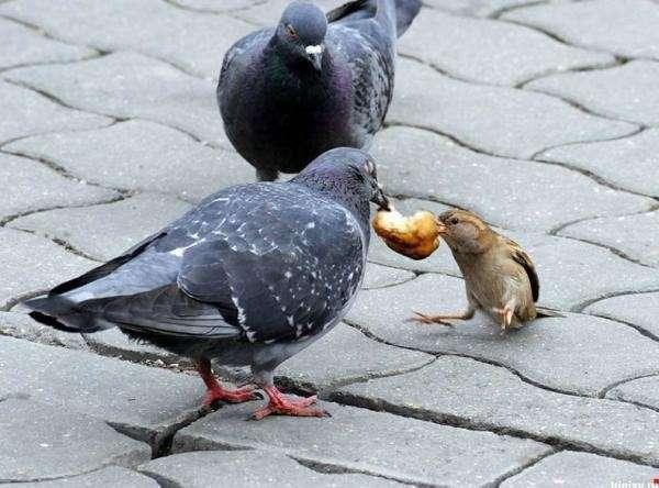 Ты - не ты, если голоден (28 фото)