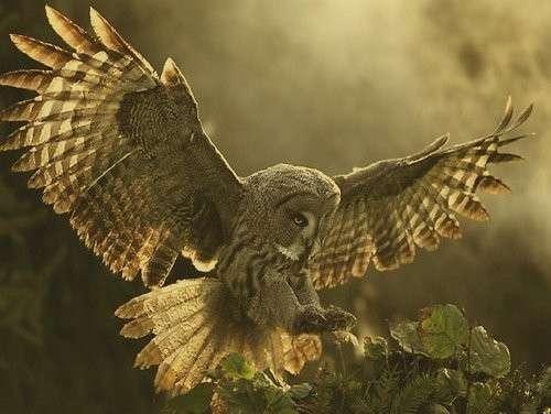 Замечательные фотографии с совами и филинами (22 фото)