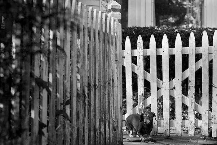 30 фотографий пожилых собак, которые растопят ваше сердце (30 фото)