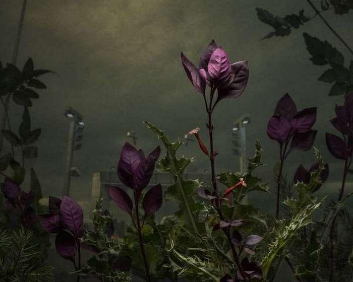Magnum назвали лучших <br><br><b> <b>Дэниэл Шипп. Победитель в номинации «Художественная фотография. Серия»</b> </b><br><img class=