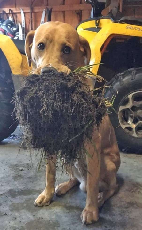 Собаки, делающие явно странные вещи <br><img class=