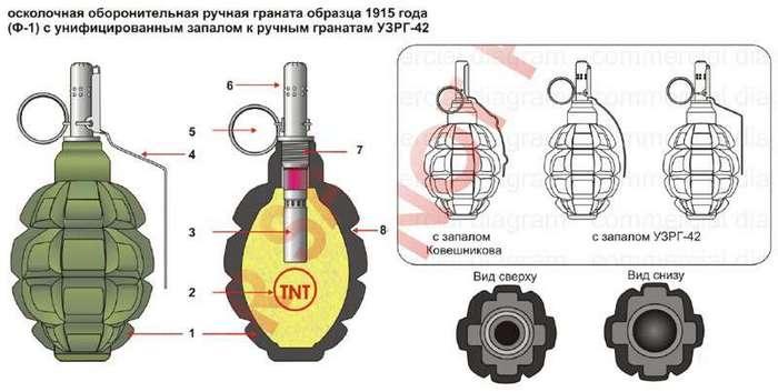 Почему гранату Ф-1 называют -лимонкой- <br><img class=