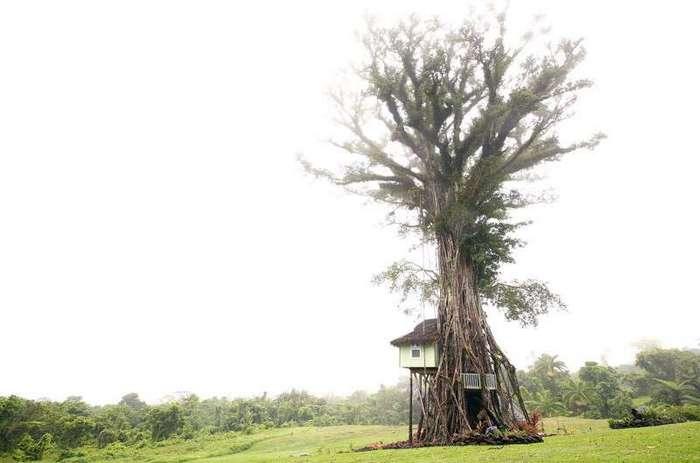 Из жизни деревьев <br><br>Китайская провинция Хэбей. Местный фермер шесть лет добивался того, чтобы груши росли в формах<br /> <img class=