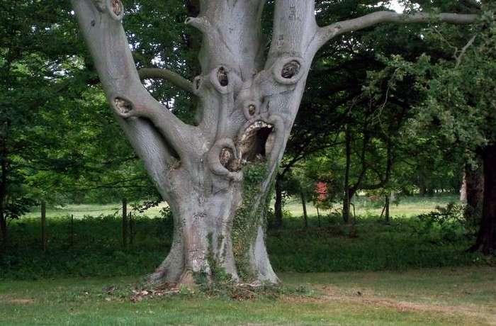 Из жизни деревьев <br><br>Белое дерево в тропическом лесу Амазонки<br /> <img class=