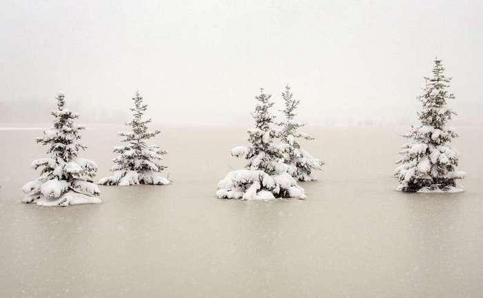 Из жизни деревьев <br><br>Великая Китайская Стена<br /> <img class=