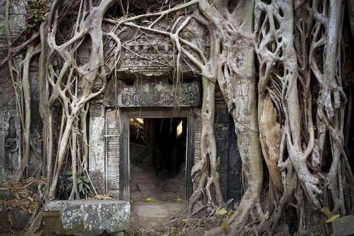 Из жизни деревьев <br><br>В ветвях этих деревьев пауки прячутся от павдков<br /> <img class=