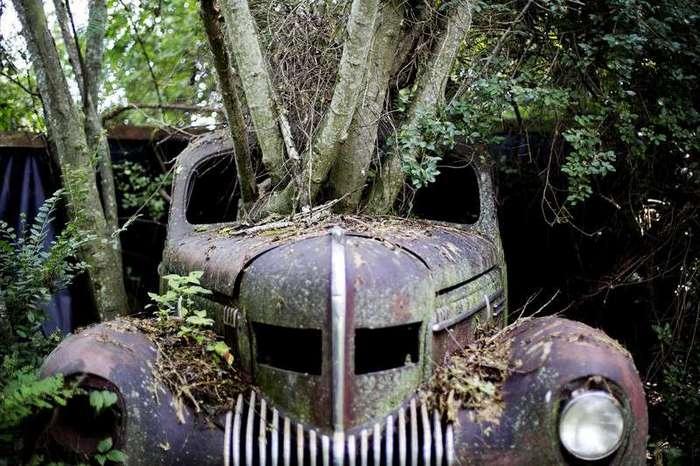 Из жизни деревьев <br><br>Заброшенная площадка для утилизации покрышек во Франции<br /> <img class=