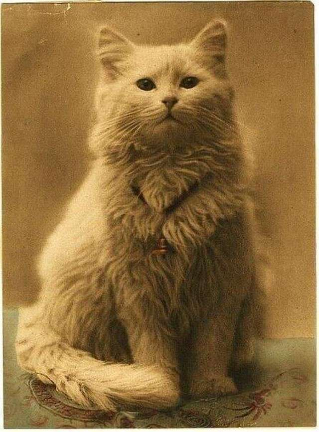 Очень интересные исторические фото <br><br><b> <b>Первая в мире фотография кота, 1880–е годы, Британская империя</b> </b><br><img class=