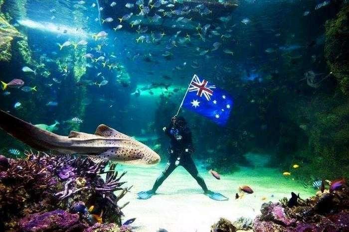 Самые известные океанариумы мира <br><br>Год появления: 1984.<br ><br><br ><br>В Дании в городе Хиртсхальс находится известный океанариум Северного Моря – уникальный развлекательный центр, незабываемые впечатления от посещения которого гарантированы каждому. Суммарный объем аквариумов этого центра составляет 4 500 кубометров, в нем обитает 70 видов рыб. Кому-то такая коллекция может показаться совсем скромной, но каждый из обитателей этого удивительного океанариума – редчайший морской житель. Только в океанариуме Северного моря можно одновременно наблюдать за несколькими рыбами-лунами, неспешные движения которых просто завораживают.<br ><br><br ><br>Открытие океанариума состоялось в 1984 году, среди его выдающихся особенностей огромный аквариум, который сконструирован в форме амфитеатра. Высота его стекол составляет 8 метров, через них очень удобно наблюдать за стаями макрели и сельди, а также огромными акулами. Каждый день для гостей океанариума проводят интересное шоу, они могут наблюдать за тем, как погружается в аквариум аквалангист, чтобы покормить рыб.<br ><br><br ><br>Помимо огромного закрытого аквариума в центре есть и большой открытый бассейн, он стал домом для тюленей. Путешественникам с детьми будет интересно посетить океанариум в теплое время года, когда для самых маленьких посетителей открывают интерактивную зону Krabbekysten. Она представляет собой большую игровую площадку с прудом, «трогательным» бассейном и пирсом, с которого можно половить крабов. Летом посетителям доступны отличные зоны для пикника, кафе с открытыми террасами и сувенирные магазины.<br /> <br><b> <b>Океанариум Аква, Австралия</b> </b><br><img class=