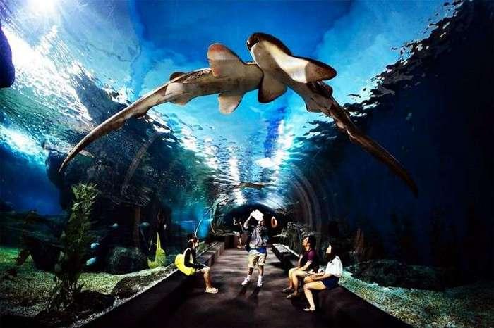 Самые известные океанариумы мира <br><br>Год появления: 1992. Площадь: 3 100 кв. метров. Населенность (посещаемость): 1,2 миллиона человек в год.<br ><br><br ><br>В Италии крупнейший океанариум находится в Генуе, он является вторым по величине в Европе. Открытие океанариума состоялось в 1992 году, он был построен специально к открытию выставки Genoa Expo'92. Изначально центр имеет важное образовательное, экологическое и даже историческое значение. Его открытие было приурочено к знаменательному дню – 500-летию со дня открытия Христофором Колумбом Нового света.<br ><br><br ><br>Посетителей океанариум Генуи знакомит с типичными обитателями Лигурийского моря, представителями северных вод Атлантического океана, а также типичными обитателями рифов Карибского моря. Таким образом, представленная экспозиция фактически воспроизводит морской путь, который более 500 лет назад проделал Христофор Колумб. Также стоит отметить, что представленная посетителям экспозиция акцентирует внимание на важнейших экологических проблемах планеты, для посетителей проводят интересные познавательные экскурсии и лекции. Площадь океанариума составляет 3 100 кв. метров, каждый год его посещает порядка 1,2 миллиона человек.<br ><br><br ><br>У его посетителей будет возможность полюбоваться самыми невероятными обитателями морских глубин, которые теперь живут в огромном аквариуме, а также понаблюдать за скатами, которые живут в большом открытом резервуаре. Всего в океанариуме насчитывается 70 резервуаров, на знакомство с обитателями которых необходимо потратить не один час. Есть в центре и «эксклюзивный аттракцион», который называется «Ночь с акулами». Один раз в месяц все желающие могут провести в океанариуме ночь и понаблюдать за тем, как ведут себя его обитатели с наступлением темноты.<br /> <br><b> <b>Мир Сиамского океана, Таиланд</b> </b><br><img class=