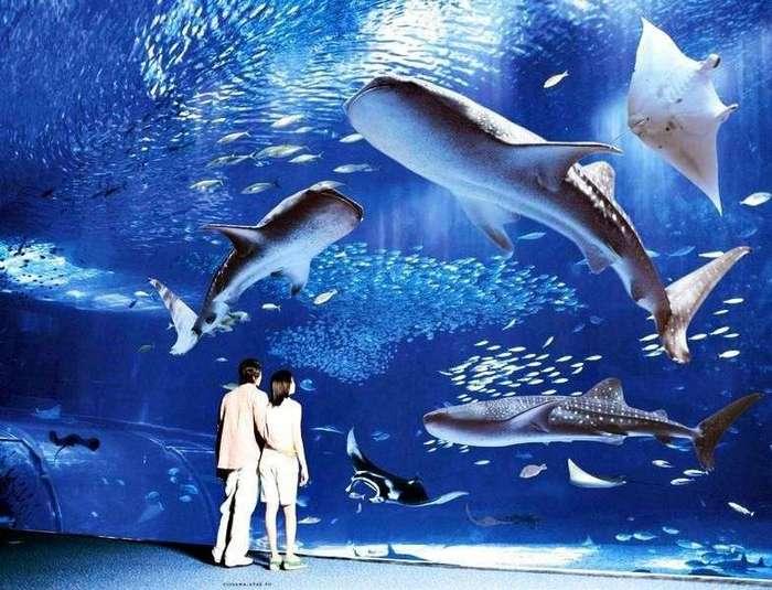 Самые известные океанариумы мира <br><br>Океан! Он всегда манил людей своей гармоничной красотой и множеством скрытых под толщей воды тайн. Мировой океан поражает своим величием, скрытый в его лазурных водах мир уникален и невероятно интересен. Чтобы полюбоваться им, многие осваивают мастерство погружения с аквалангом и отправляются в самые заповедные уголки планеты. Есть и более доступный способ полюбоваться красотой подводного мира – посетить один из самых известных океанариумов планеты. В самых крутых океанариумах посетители могут не только увидеть редчайших морских обитателей, но и прогуляться по длинным прозрачным лабиринтам, окруженным морской водой, поужинать в подводных ресторанах и даже остаться на ночь в одном из залов и поспать рядом с притаившимися за стеклом акулами.<br /> <br><b> <b>Океанариум Тюрауми, Япония</b> </b><br><img class=