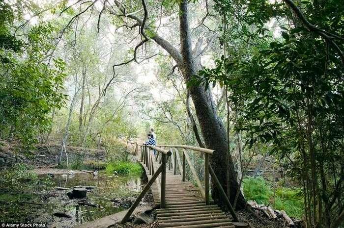 10 самых прекрасных садов мира <br><br>Французский сад, созданный по образу и подобию садов Версаля, считается одним из самых красивых в тропическом парке Нонг Нуч.<br /> <br><b> <b>Ботанический сад Кирстенбош, ЮАР.</b> </b><br><img class=