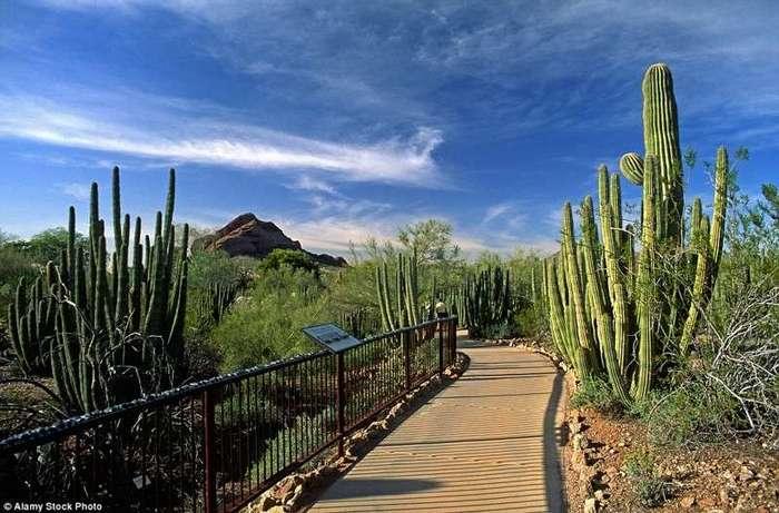 10 самых прекрасных садов мира <br><br>Лучшее время для посещения монастыря – середина июля, когда парк обильно зарастает мхами, и осень, когда желтеют и краснеют листья клёнов.<br /> <br><b> <b>Ботанический сад в пустыне в штате Аризона, США.</b> </b><br><img class=