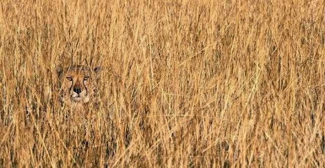 Удивительные животные, которые маскируются лучше, чем ниндзя -23 фото-