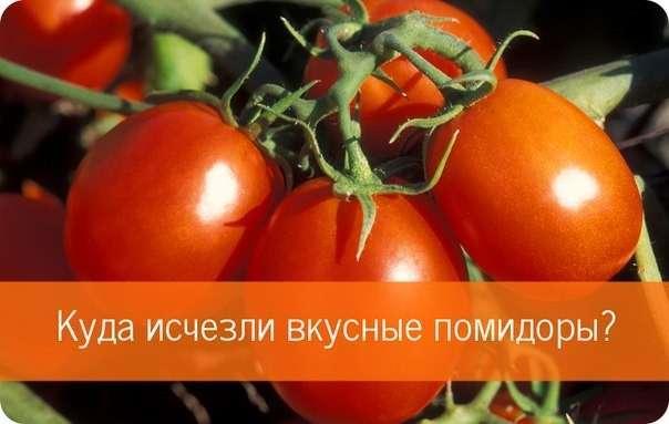 Почему у магазинных помидоров -картонный- привкус? -6 фото-