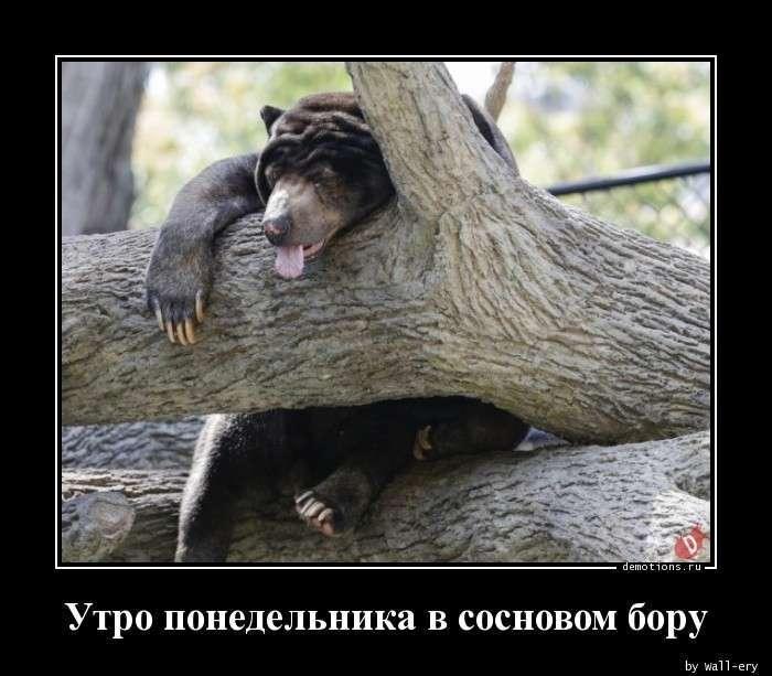 Демотиваторы -39 фото-