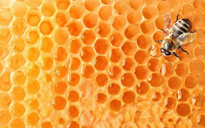 10 вещей, которые могут исчезнуть навсегда, если вымрут пчёлы (11 фото)