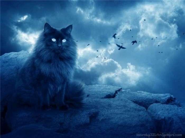 Кот -осторожно криптота- -1 фото-