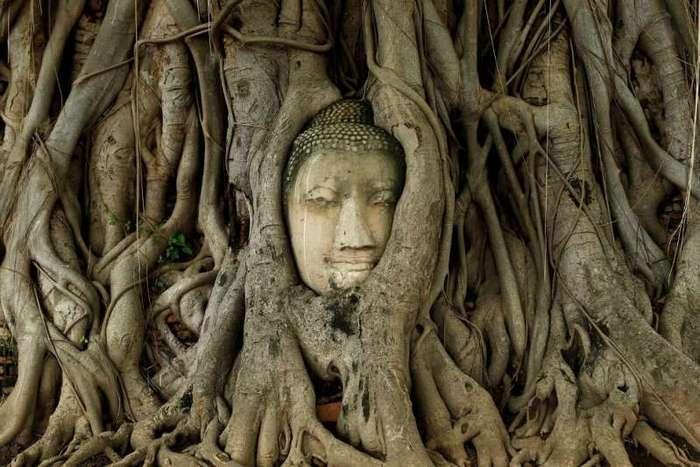 Необычные деревья из разных уголков планеты-25 фото-