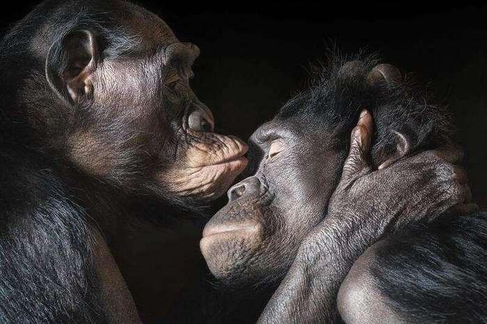 Чем на самом деле мы отличаемся от обезьян-6 фото-