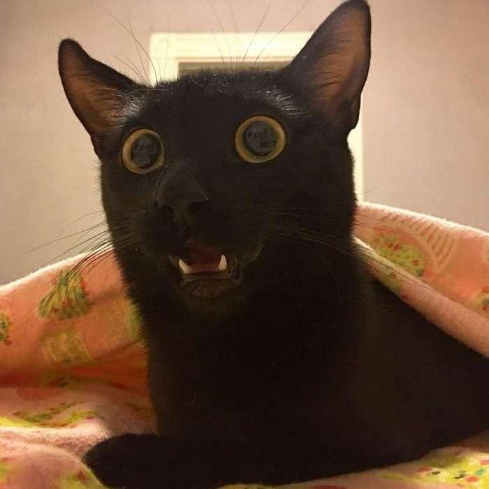 Эмоциональные коты!-24 фото-