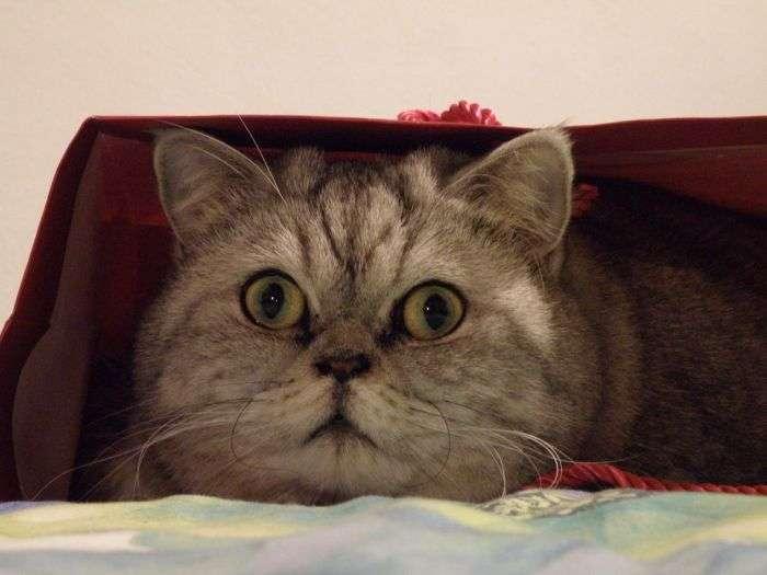 Толстая кошка Джули стала звездой интернета (19 фото)