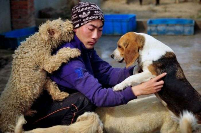 1500 собак и 200 котов в приюте (15 фото)