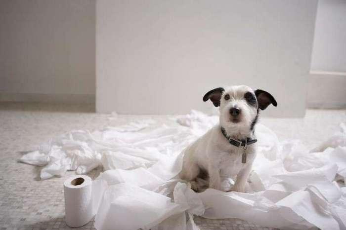 29 собак, пойманных на месте преступления-27 фото-