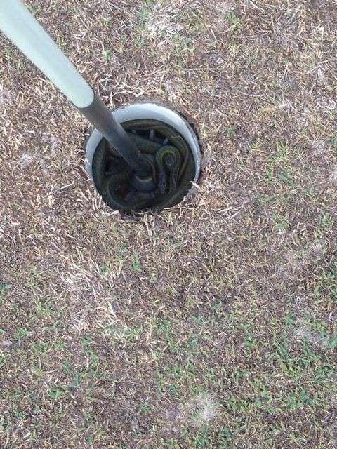 22 фотодоказательства, что Австралия - ад для офидиофобов-23 фото-