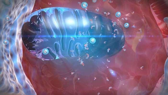 Красивых биомедицинских картинок пост-32 фото + 7 видео-